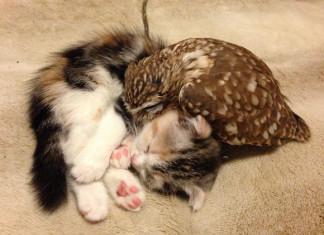 Кот и сова