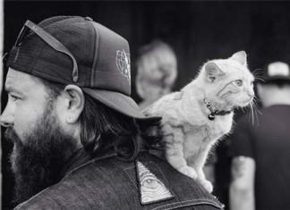 байкер спас котенка