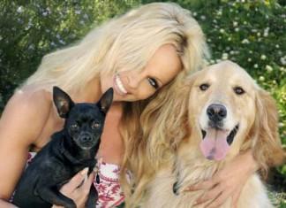 Памела Андерсон за защиту животных