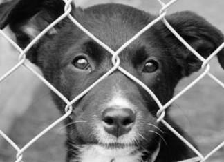 закон о содержании домашних животных