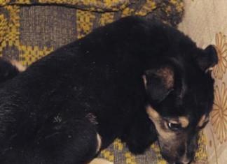 волонтеры и МЧС спасали щенка 15 часов