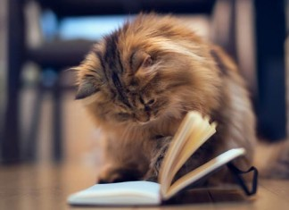 Можно ли обучить вашего кота. Тесты о животных