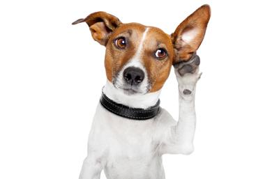 собака и знакомые слова