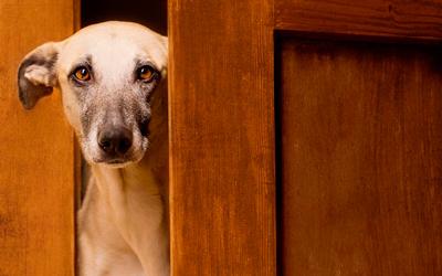 собака и звуки за дверями