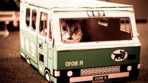 kot-avtobus
