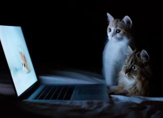 как поменялась жизнь котов с развитием технологий