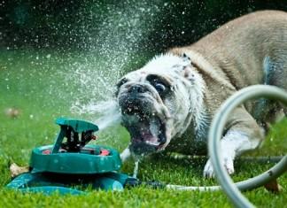 как спасти животное от жары