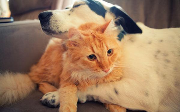 cat-dog-hotel