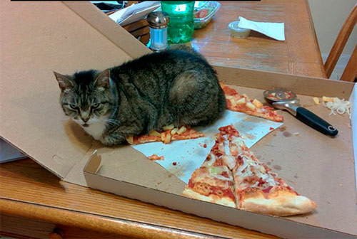 cat-logic-pizza