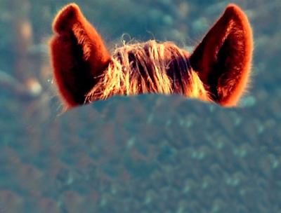 ears-10-2
