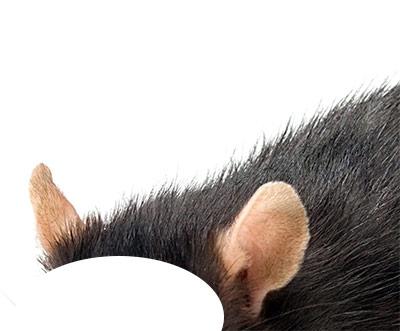ears-14-2