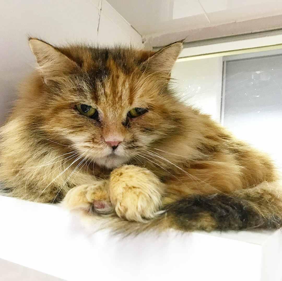 Госпитализированные кошки. Фото из инстаграма catsmuseum.