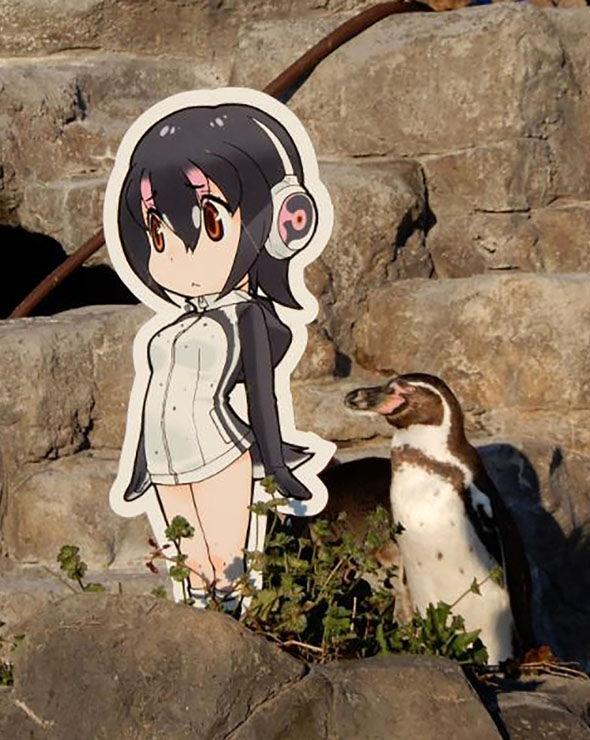 пингвин4